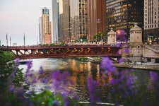 Chicago Lavender Bridge